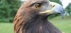 Seasonal Trail Closures in place to Protect Golden Eagle Nesting